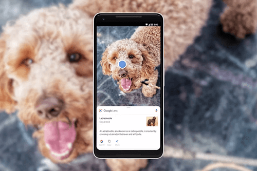 Google Lens scanning a dog
